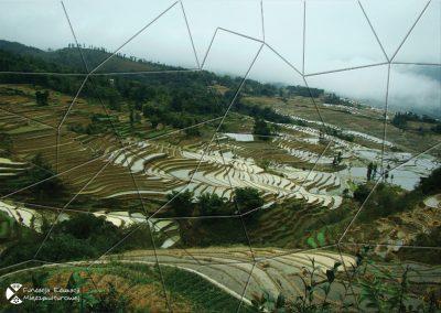 Ryżowe tarasy wWietnamie
