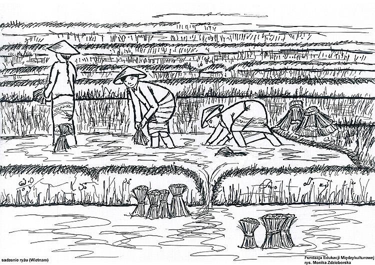 Sadzenie ryżu (Wietnam)